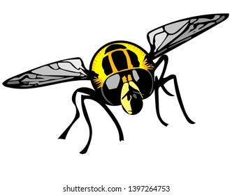 Isolated colour Illustration of Footballer hoverfly head-on on white background.