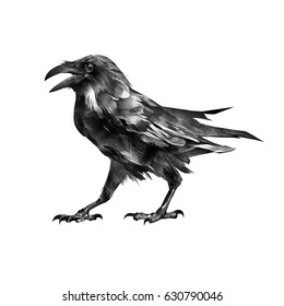 Isolated Drawing Sitting Bird Crow