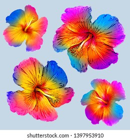Isolated graphic colorful hibiscos on the blue background