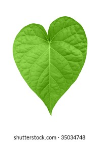 Isolated heart shaped leaf