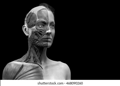 isolated Human anatomy of a female - muscle anatomy of the face neck and chest , medical image reference of human anatomy in realistic 3D  rendering in black and white