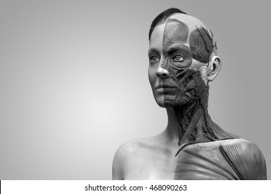 isolated human anatomy model  of a female - muscle anatomy of the face neck and chest , medical image reference of human anatomy in realistic 3D rendering in black and white