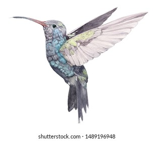 Isolated hummingbird. Hand drawn in watercolor one isolated hummingbird on white background
