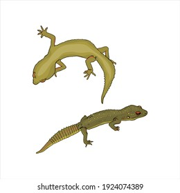 Isolated illustration of geckos on a white background. Lizards pets for pet shop, logo, icon