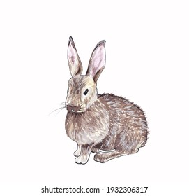 Isolated illustration of a gray rabbit hand drawn in watercolor on a white background