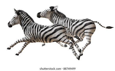 Isolated image of zebras running on a white background