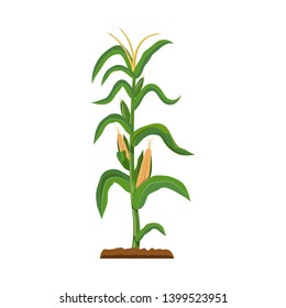 Isolated object of greenhouse and plant icon. Set of greenhouse and garden stock bitmap illustration.