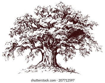 Isolated old tree with sprawling branches