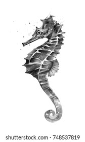 isolated painted seahorse on the side