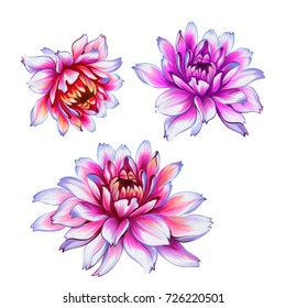 isolated peony flower illustrations. beautiful flower heads on white background. Romantic dahlia flowers.