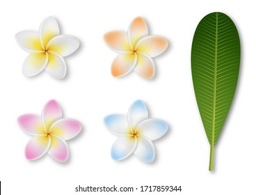 Isolated plumeria flowers and leaf on white background