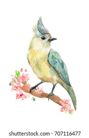 isolated pretty bird on flowering twig. watercolor painting
