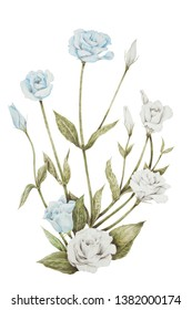 Isolated realistic Eustoma, Lisianthus or Prairie gentian flowers colored pencil drawing on white background