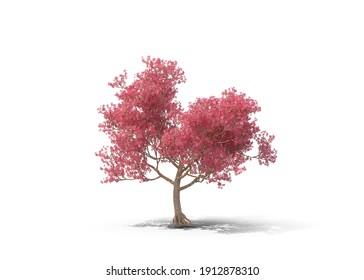 Isolated single tree on white background, 3d Illustration.