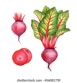 Isolated watercolor beetroot on white background