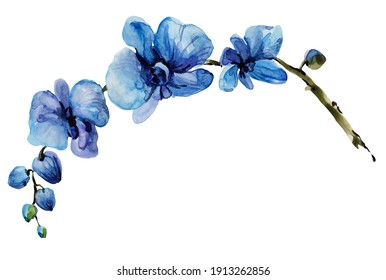 isolated watercolor blue orchid flower hand drawn illustration