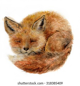Isolated Watercolor Painting Of Sleeping Little Fox