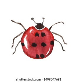 Isolated watercolor red ladybug with the spots that are in the form of hearts.