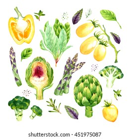 Isolated watercolor vegetables set with asparagus, broccoli, artichoke, spinach, tomato, pepper, basil, rosemary, thyme, dill on white background