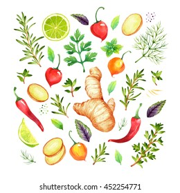 Isolated watercolor vegetables set with ginger, lime, chili  pepper, rosemary, parsley, basil, thyme, dill on white background