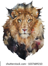 Isolated watercolour painting of lion on white background