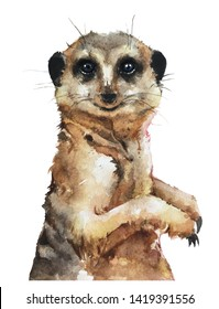 Isolated watercolour painting of meerkat on white background