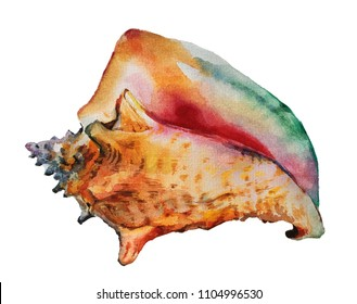 Isolated watercolour painting of Queen conch seashell on white background