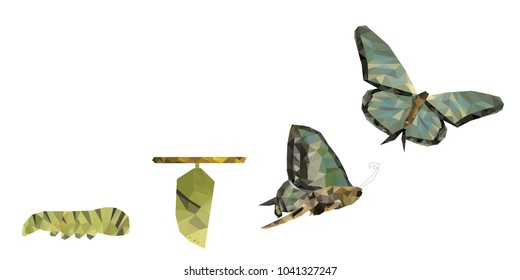 Isolated white background of beautiful natural green abstract low poly butterfly life cycle, represent successful growth, bright future and transformation concept. With empty copy space background.
