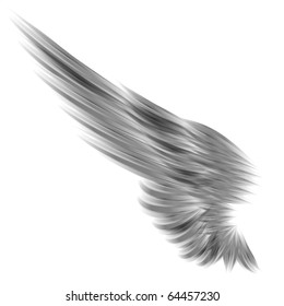 The isolated wing on white background