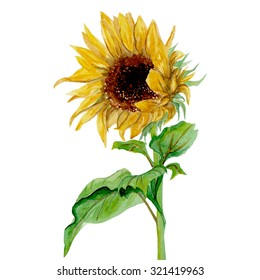 Isolated yellow sunflower painted in watercolor on a white background