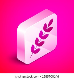 Isometric Cereals set with rice, wheat, corn, oats, rye, barley icon isolated on pink background. Ears of wheat bread symbols. Silver square button.