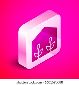 Isometric Home greenhouse and plants icon isolated on pink background. Silver square button.