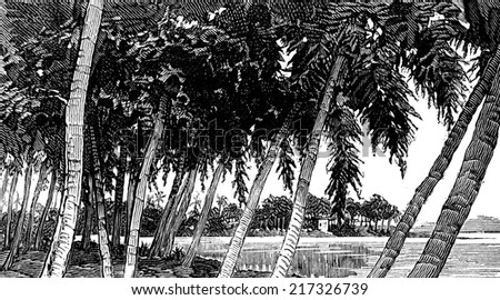 isthmus panama river vintage engraved illustration stock