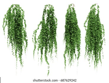 ivy leaves isolated on a white background. 3D illustration.
