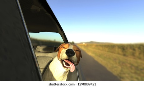 Jack russel terrier sticking head out of car window 3d render