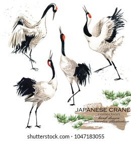 japanese crane hand drawn watercolor illustration set