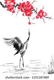 Japanese cranes bird drawing .  Red stylized flowers of plum mei, wild apricots and sakura . Watercolor and ink illustration in style sumi-e, u-sin, go-hua Oriental traditional painting. Isolated .