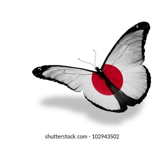 Japanese flag butterfly flying, isolated on white background