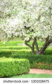 Japanese flowering crabapple (binomial name: Malus floribunda) with mass of white blooms by garden path and hedges in spring, with digital painting effect