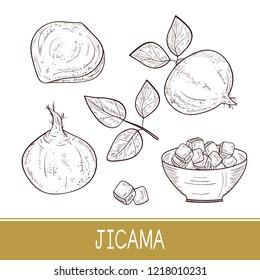 Jicama. Vegetable. Root, sheet, bowl. Sketch. Monophonic. Set