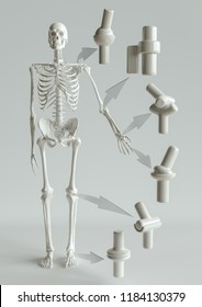 Joint types on the human skeleton - 3D Rendering