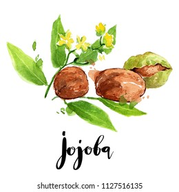 Jojoba oil watercolor hand drawn illustration. Skin and hair treatment isolated on white background for beauty and health theme design background. Colorful painting art sketch.