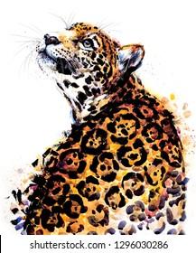 juguar. tropical wild cat watercolor illustration. Brazilian wildlife fauna. jungle nature