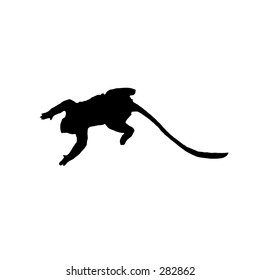 Jumping monkey silhouette on white background