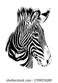 jumping striped African Zebra, hand-drawn in full- length ink