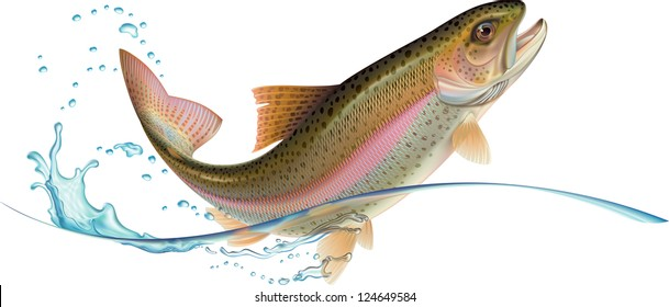 Jumping trout with water splash. Raster. Check my portfolio for a vector version.