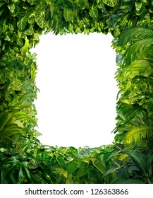 Jungle border blank frame with rich tropical green plants as ferns and palm tree leaves found in southern hot climates as south America Hawaii and Asia with framed white isolated copy space center.