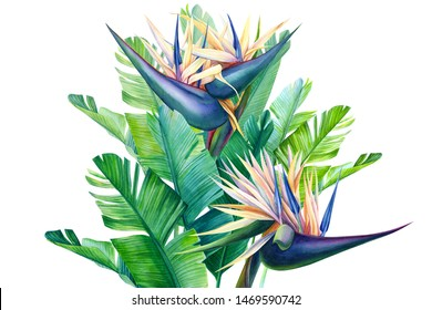 jungle bouquet, rtopic plants, white strelitzia flowers on an isolated white background, watercolor botanical painting, hand drawing