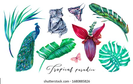 Jungle leaves, blooming flower, exotic plants, palm branch, monstera, banana leaf, butterfly, koala, peacock, tropical set isolated on white background. Summer botanical illustration. Floral clip art.