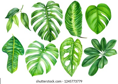 jungle set of tropical plants, green leaves on isolated white background, watercolor illustration, botanical painting, monstera, ficus, creepers